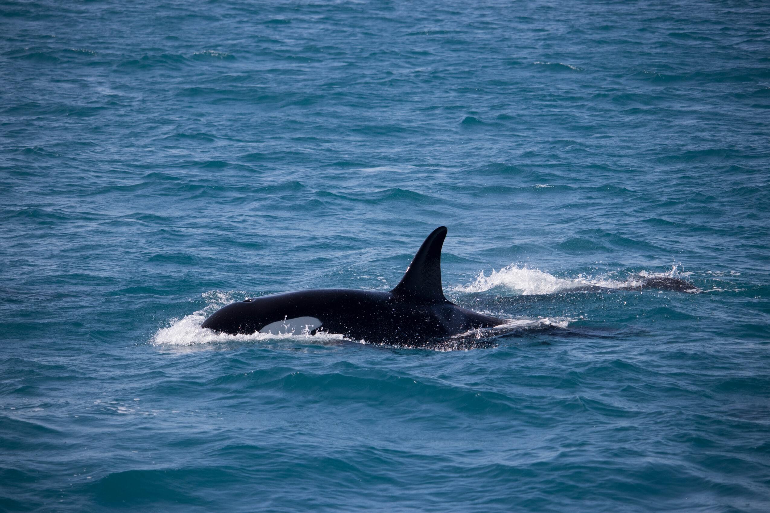 Orca VWFS
